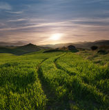 Tracks Crossing A Green Field In Misty Sunset. Tracks of tractor crossing a green grass with a abandoned hut against overcast sky at the sunset and the hilly Royalty Free Stock Photo