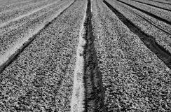 Tracks in the field Royalty Free Stock Images