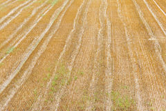 Tracks on a field Royalty Free Stock Photos