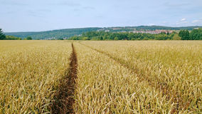 Tracks in a field of wheat Stock Photo