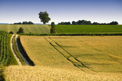 Tracks in the fields (Germany) Royalty Free Stock Photography