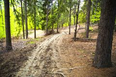 Tracks in forest Stock Photography