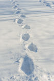 Tracks on fresh snow Royalty Free Stock Images