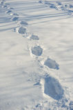 Tracks on fresh snow Royalty Free Stock Photo
