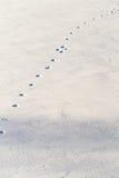 Tracks. In the frozen snow Stock Photos