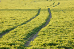 Tracks in green field Royalty Free Stock Photos