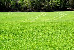 Tracks in the Green Grass Stock Image