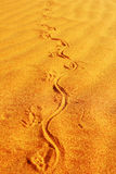 Tracks of Monitor Lizard in Sand, Francois Peron National Park Royalty Free Stock Photo