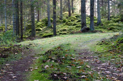 Tracks in mossy forest Stock Photos