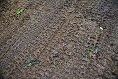 Tracks on mud Stock Images