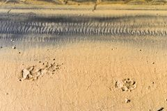 Tracks and Prints in dry sand by animals and humans. Different tracks in the dry sand early morning, birds and other tracks like dogs, birds, macro photoghraphy Stock Photography