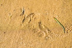 Tracks and Prints in dry sand by animals and humans. Different tracks in the dry sand early morning, birds and other tracks like dogs, birds, macro photoghraphy Stock Photo