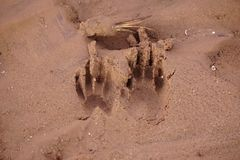 Tracks of a raccoon Stock Image