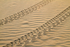 Tracks On Sand Stock Image