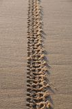 Tracks On Sand Stock Images