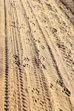 Tracks In The Sand Royalty Free Stock Photography