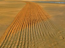 Tracks in the sand. Tracks of cleaner tractor in the sand of the beach stock images