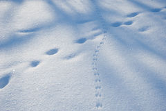 Tracks and shadows,winter Stock Photography