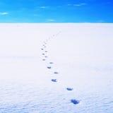 Tracks in the snow. Stock Photos