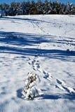 Tracks in a snow Stock Photos
