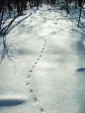 Tracks in the snow. Tracks from a small animal on freshlyy fallen snow royalty free stock photo