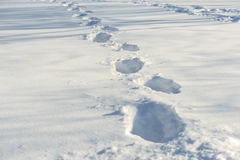 Tracks on the snow Royalty Free Stock Photo