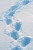 Tracks on the snow. Illuminated by the evening sun Royalty Free Stock Images