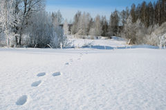 Tracks in the snow. Royalty Free Stock Image