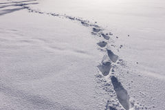 Tracks through the snow. Stock Photography