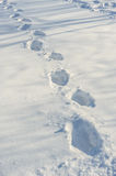 Tracks on the snow Royalty Free Stock Photography