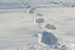 Tracks on the snow Stock Photography