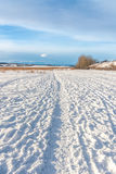 Tracks in the Snow royalty free stock images
