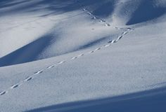 Tracks in the snowi Stock Image