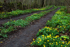 Tracks in springtime Royalty Free Stock Photography