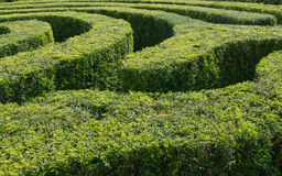 Tracks of a swirling maze Stock Photos