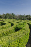 Tracks of a swirling maze Royalty Free Stock Photos
