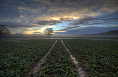 Tracks. Vehicle tracks in a farmer's field during sunrise Stock Image