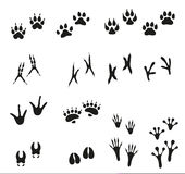 Tracks of wild animals and birds. Paw print. Icons on white background vector illustration