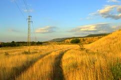 Tracks in yellow grass Stock Photos