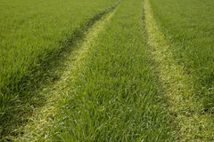 Tracktor-Bahnen auf dem grünen Gebiet Lizenzfreie Stockfotos