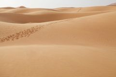 A trackway on the desert sand Royalty Free Stock Photos