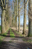 Trackway between tall bare trees Royalty Free Stock Images