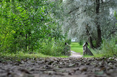 Trackway and wooden bridge in the park. Stock Photos