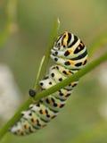 Tracteur à chenilles de Swallowtail images stock
