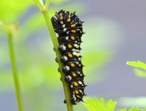 Tracteur à chenilles noir de Swallowtail images stock