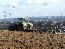 Tracteur agricole labourant le champ avec des mouettes de service images stock