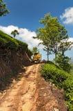 Tracteur avec des feuilles de thé à la plantation de thé après le jour ouvrable Images stock