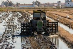 Tracteur dans le domaine de riz dans le delta de l'Èbre Photos libres de droits