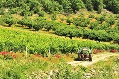 Tracteur de vignoble, gorges du le Tarn, France Image libre de droits