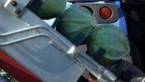 Tracteur fonctionnant au champ avec le chou de transporteur banque de vidéos